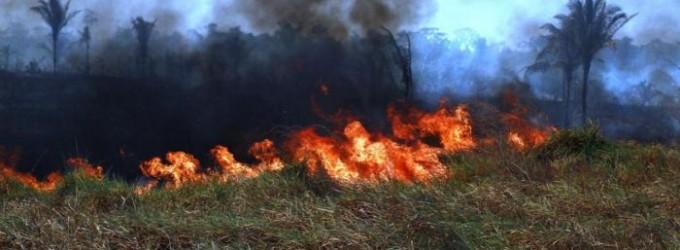 Bolsonaro prepara novos ataques aos povos da Amazônia, denuncia deputado do Pará